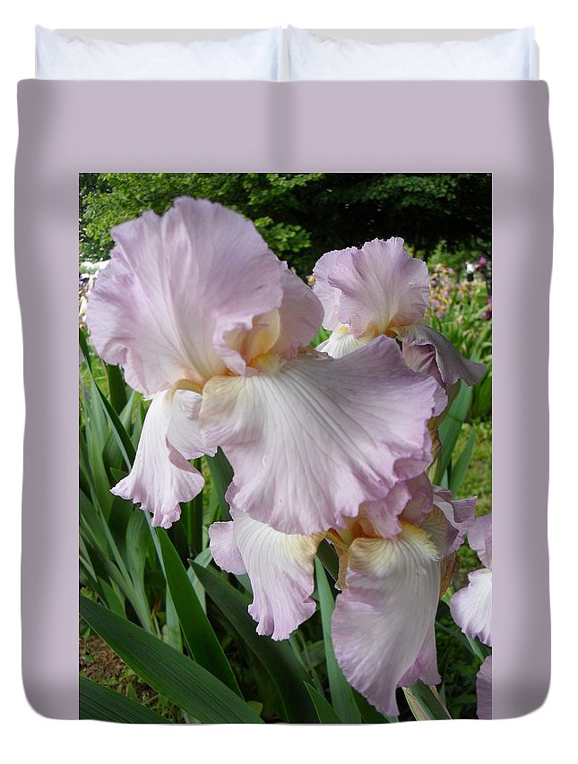 Bearded Iris Duvet Cover featuring the photograph Frills And Flounces by Peggy King