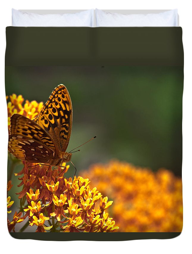 Frittalary Duvet Cover featuring the photograph Frittalary On The Prowl by Douglas Barnett