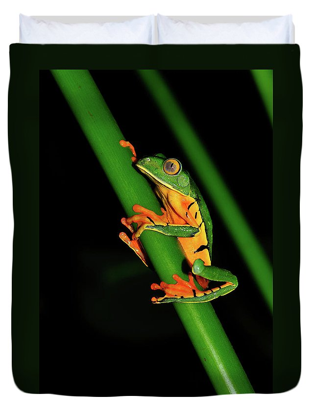 Frog Framed Prints Duvet Cover featuring the photograph Frog Pole Vault by Harry Spitz