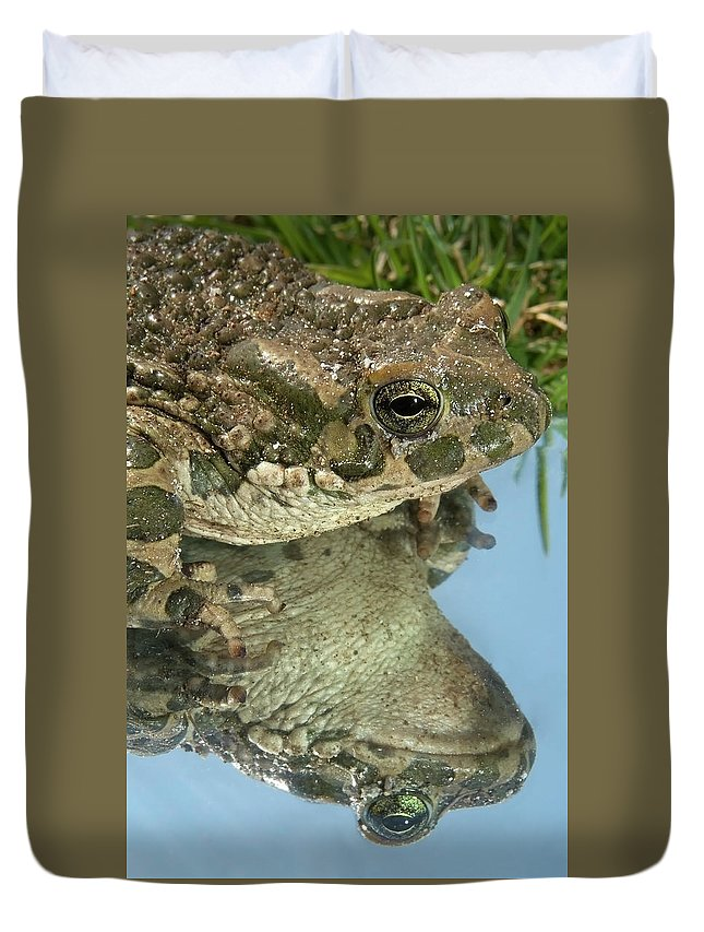 Gardener Duvet Cover featuring the photograph Frog Reflection by Cliff Norton