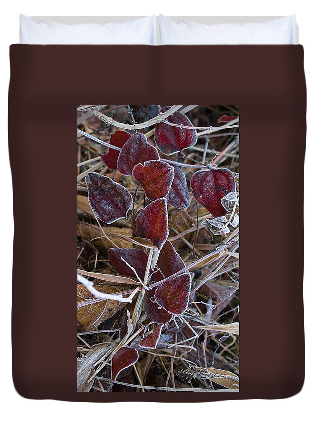 Red Duvet Cover featuring the photograph Frosted Red Green Briar by Douglas Barnett