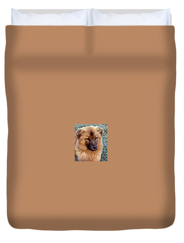 Dog Duvet Cover featuring the photograph Frosty Dog by Douglas Barnett