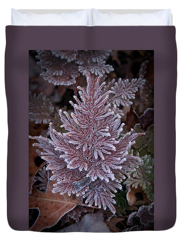 Fern Duvet Cover featuring the photograph Frosty Fern Christmas by Douglas Barnett
