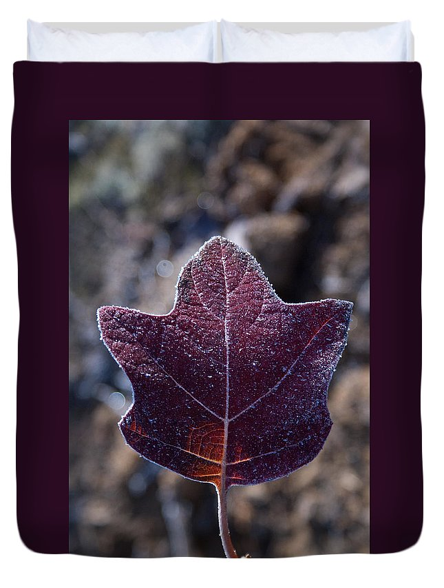 Leaf Duvet Cover featuring the photograph Frosty Lighted Leaf by Douglas Barnett