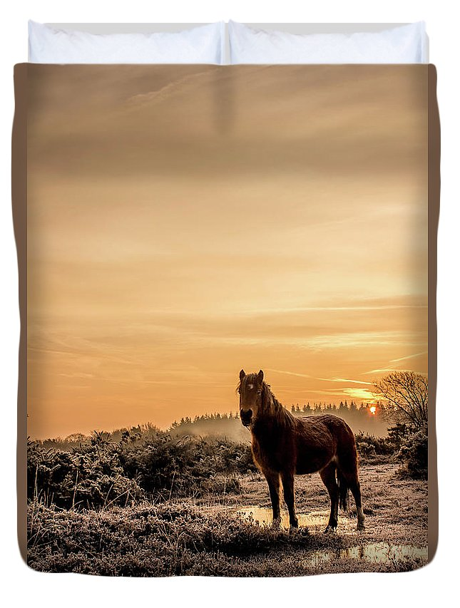 New Forest Pony Duvet Cover featuring the photograph Frosty Pony by Rosie Hall
