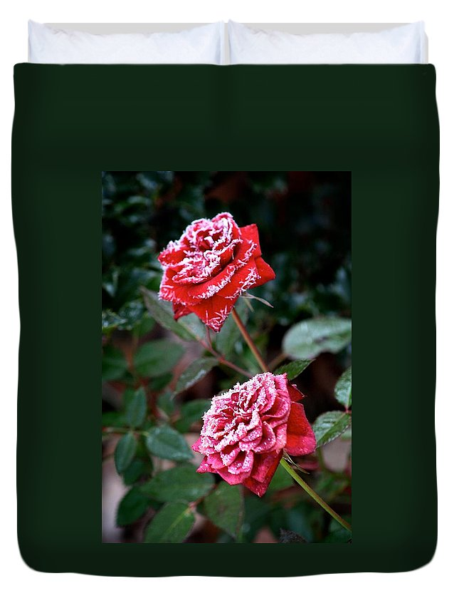 Rose Duvet Cover featuring the photograph Frosty Rose by Calvin Nelson