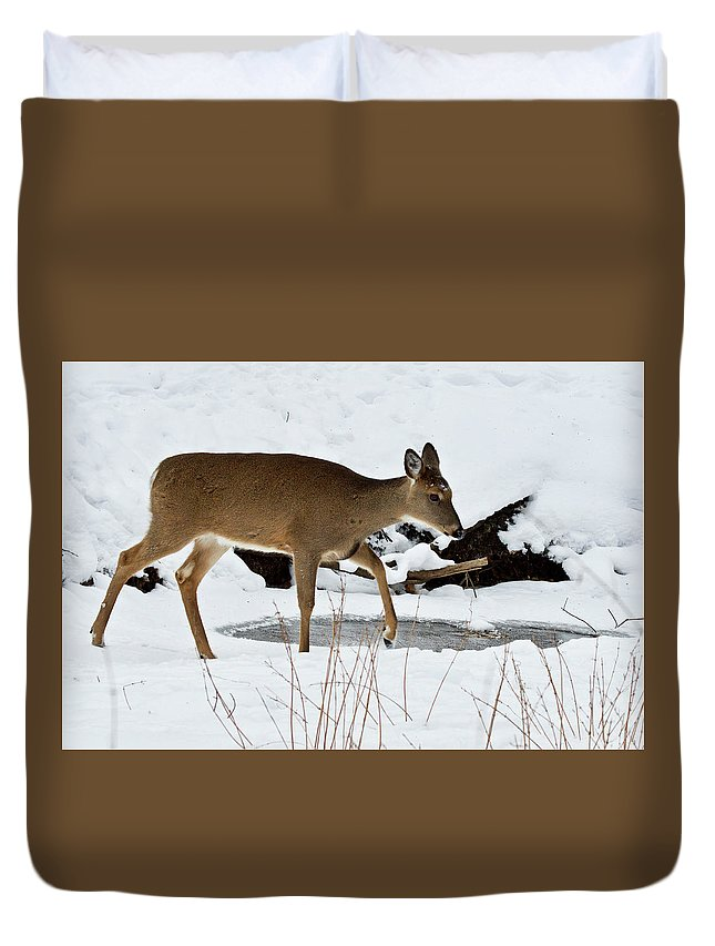 Deer Duvet Cover featuring the photograph Frozen Stream by Michael Peychich