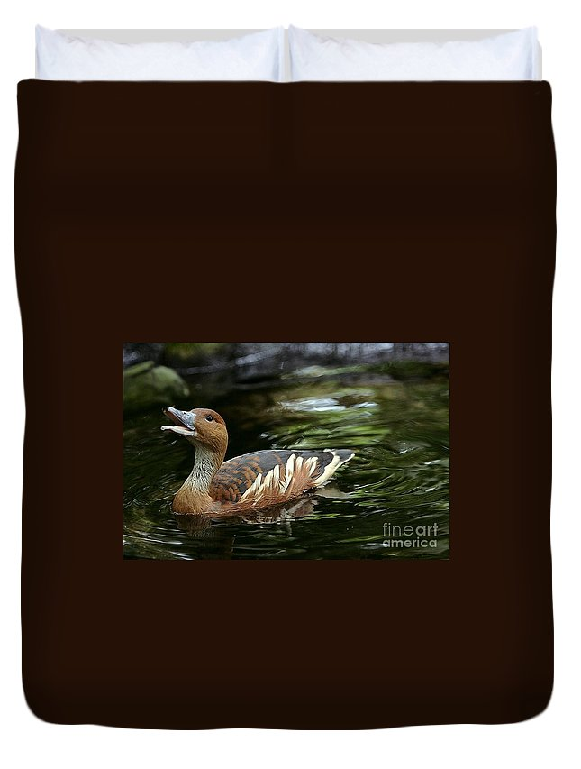 Duck Duvet Cover featuring the photograph Fulvous Whistling Duck 2 by Randy Matthews