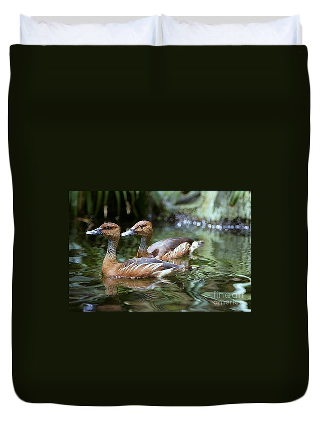 Duck Duvet Cover featuring the photograph Fulvous Whistling Duck by Randy Matthews