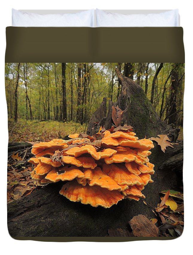 Mushroom Duvet Cover featuring the photograph Fungus by Delana Epperson