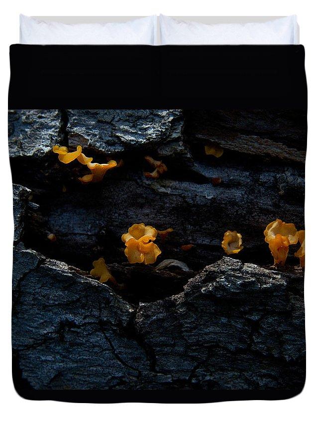 Duvet Cover featuring the photograph Fungus On Log by Douglas Barnett