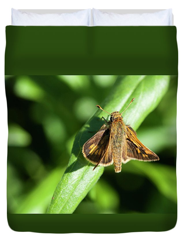 Brown Duvet Cover featuring the photograph Fuzzy Moth by Alida Thorpe
