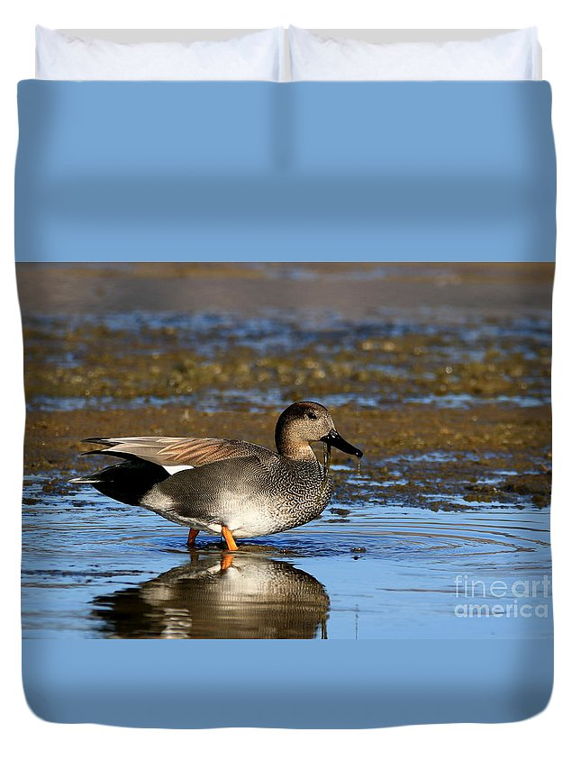 Gadwall Duvet Cover featuring the photograph Something Between My Teeth? by Craig Corwin