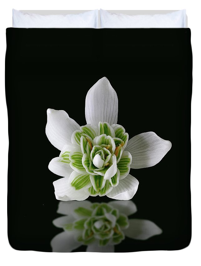 Galanthus Nivalis Duvet Cover featuring the photograph Galanthus Nivalis Flore Pleno by John Edwards