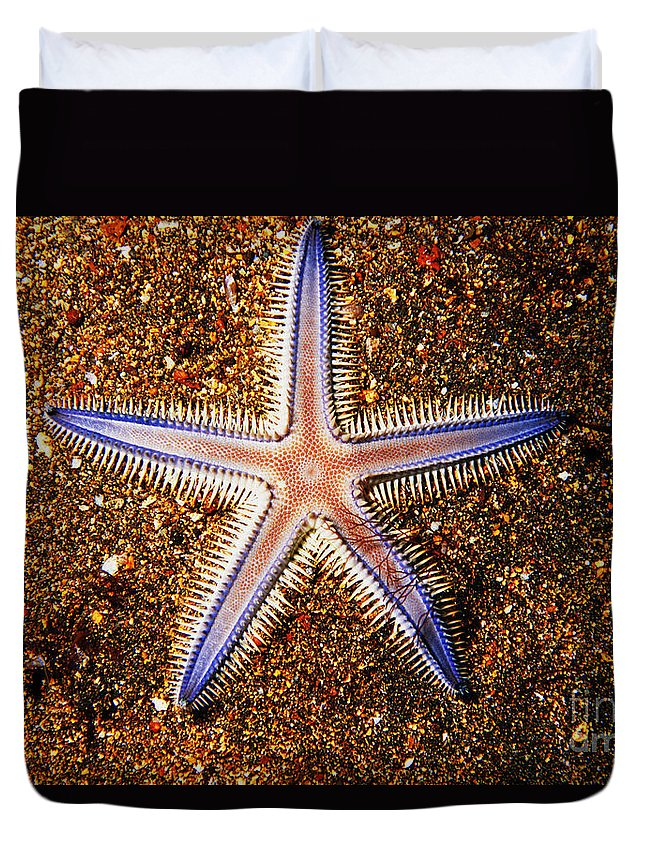 Animal Art Duvet Cover featuring the photograph Galapagos Colorful Seastar by Ed Robinson - Printscapes