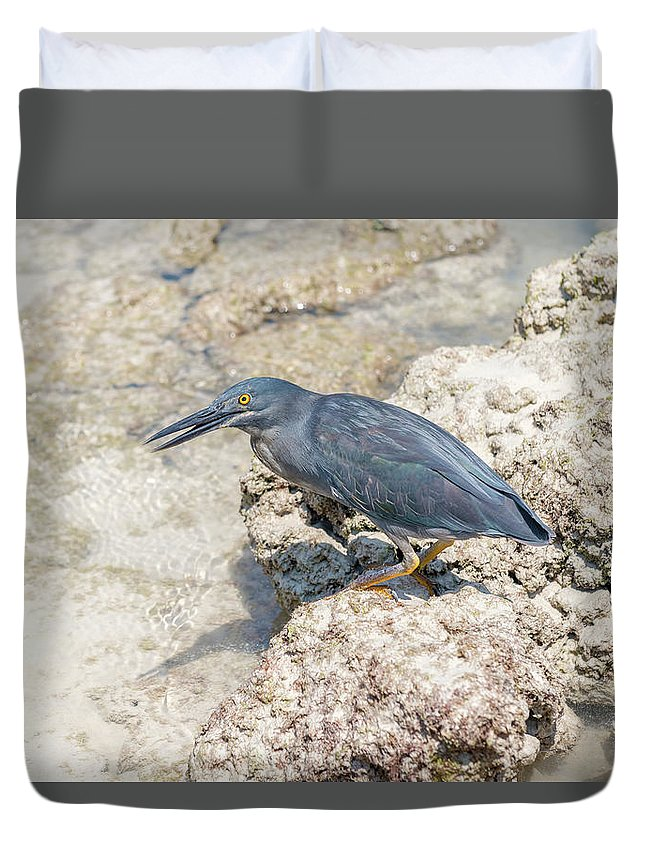 Galapagos Heron Duvet Cover featuring the photograph Galapagos Heron In Santa Cruz Island, Galapagos. by Marek Poplawski