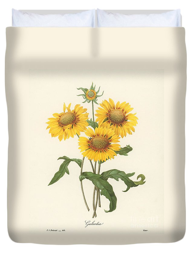 1833 Duvet Cover featuring the photograph Galardia by Granger