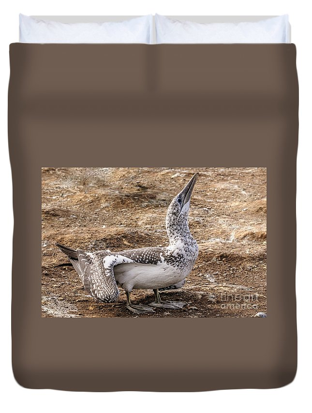 Gannet Duvet Cover featuring the photograph Gannet Chick 1 by Werner Padarin