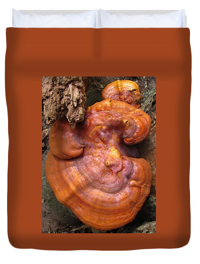 Ganoderma Lucidum Images Ganoderma Lucidum Prints Reishi Mushroom Images Reishi Mushroom Prints Ling Zhi Mushroom Images Ling Zhi Prints Shelf Fungus Images Polypore Fungi Forest Fungi Images Bracket Mushroom Images Red Shelf Fungi Biodiversity Cancer Research Chinese Medicine Natural Remedy Reishi Tea Medicinal Value Biodiversity Nature Mushroom Of Immortality Images Mushroom Of Spiritual Potency Images Duvet Cover featuring the photograph Ganoderma Lucidum by Joshua Bales