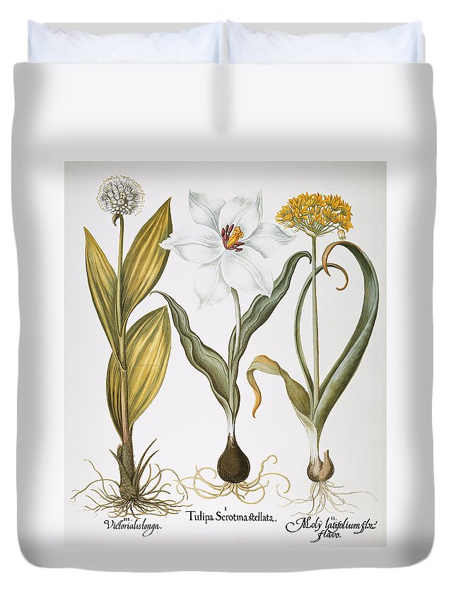 1613 Duvet Cover featuring the photograph Garlic, 1613 by Granger
