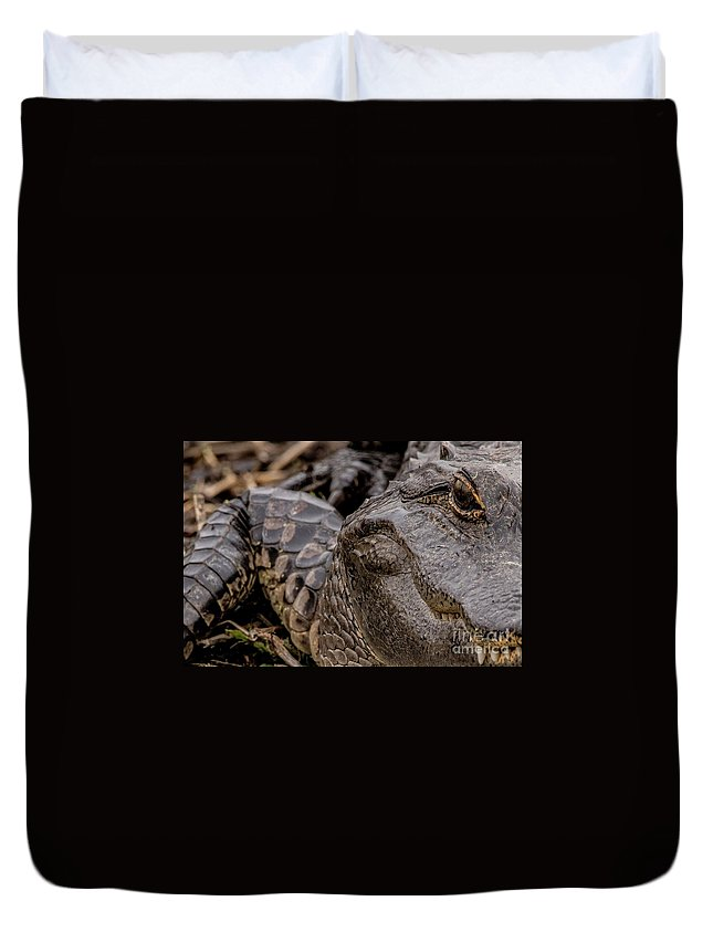 Gator Alligator Swamp Okeechobee Duvet Cover featuring the digital art Gator Eye by Bakedography Art