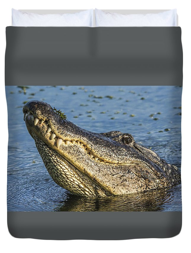 Yellow Blue Tan Grey Gray Brown Water Teeth Outdoors Reptile Black White Detailed Texture Closeup Duvet Cover featuring the photograph Gator Lean by Karl Mahnke