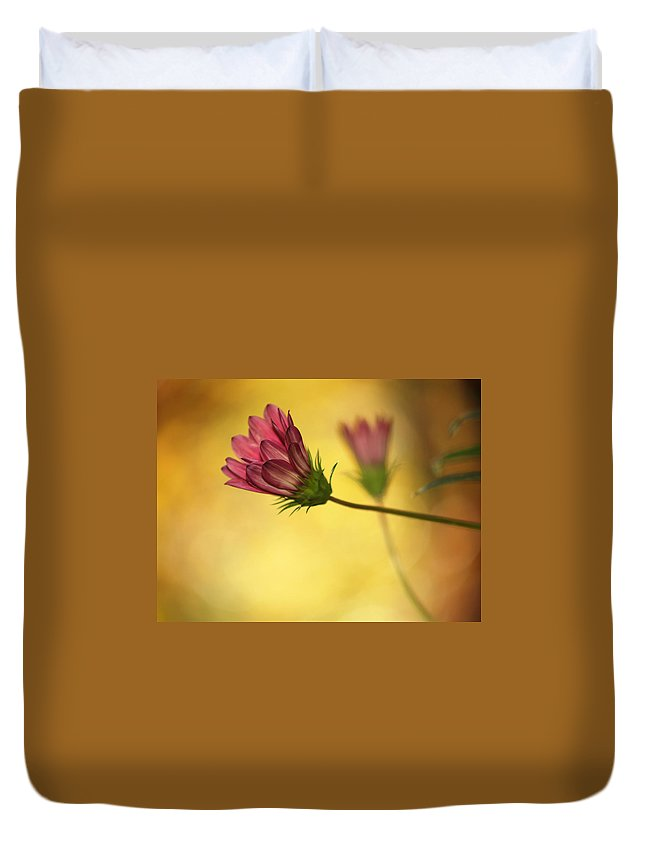 Flowers Duvet Cover featuring the photograph Gazania Affair by Dorothy Lee