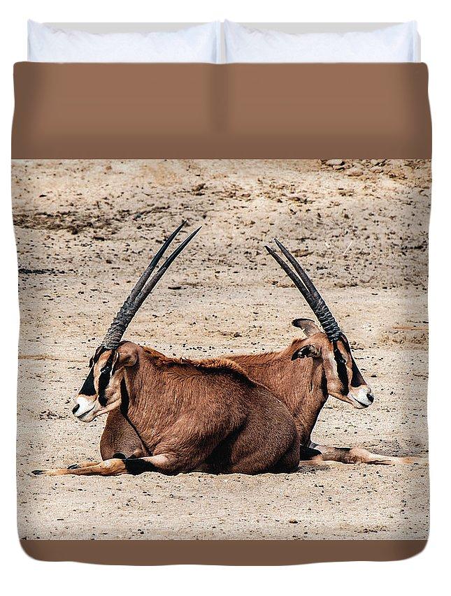 Gemsbok Duvet Cover featuring the photograph Gemsbok Bffs by William Bitman