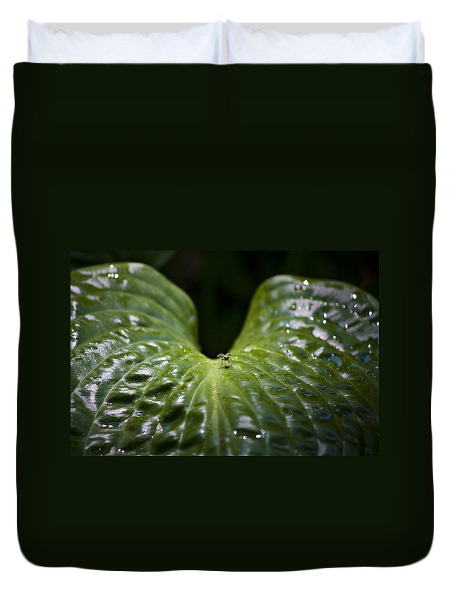 Hosta Duvet Cover featuring the photograph Getting A Drink by Teresa Mucha