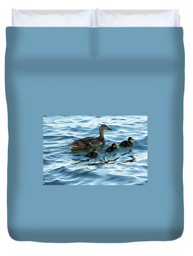 Ducks Duvet Cover featuring the photograph Getting Your Ducks In A Row by Debbie Karnes