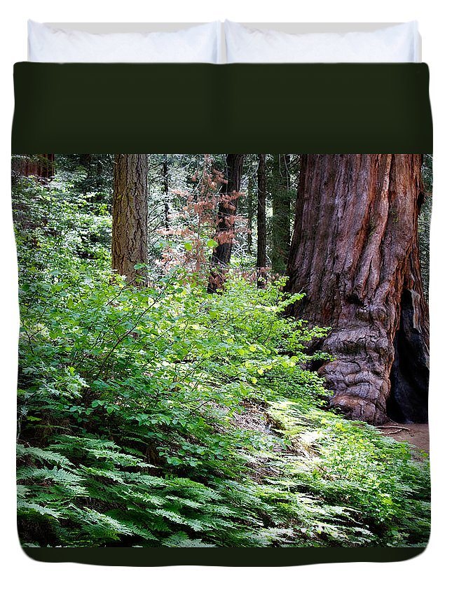 Ca Duvet Cover featuring the photograph Giant Among The Forest by Lana Trussell