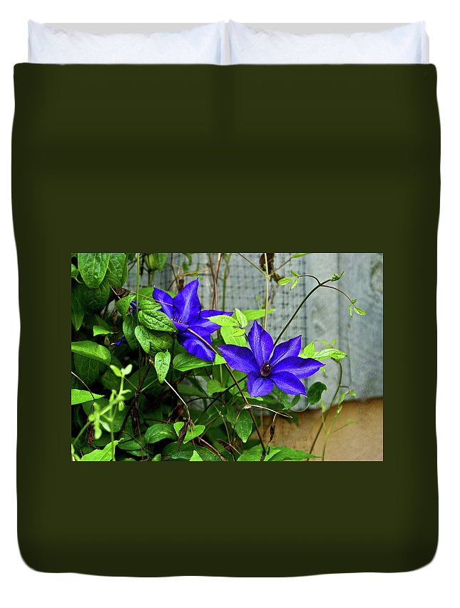 Clematis Duvet Cover featuring the photograph Giant Blue Clematis by Douglas Barnett