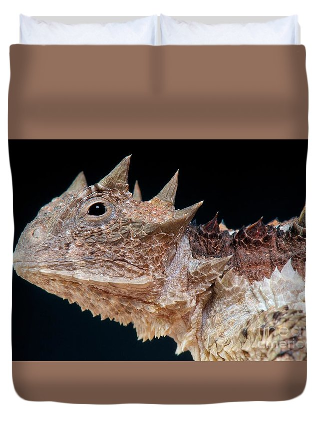 Giant Horned Lizard Duvet Cover featuring the photograph Giant Horned Lizard by Matthijs Kuijpers