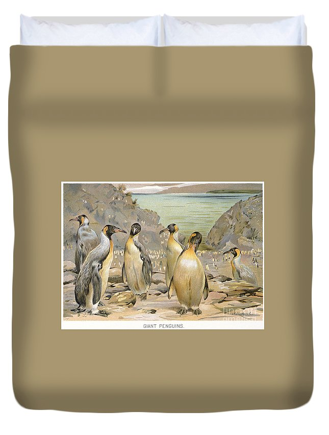 1900 Duvet Cover featuring the photograph Giant Penguins, C1900 by Granger