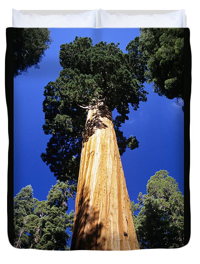 Beautiful Duvet Cover featuring the photograph Giant Sequoia by Michael Howell - Printscapes