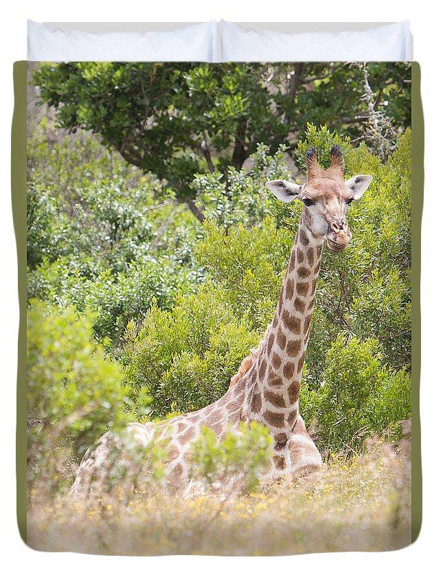 Giraffe Duvet Cover featuring the photograph Giraffe by Chris Marrison