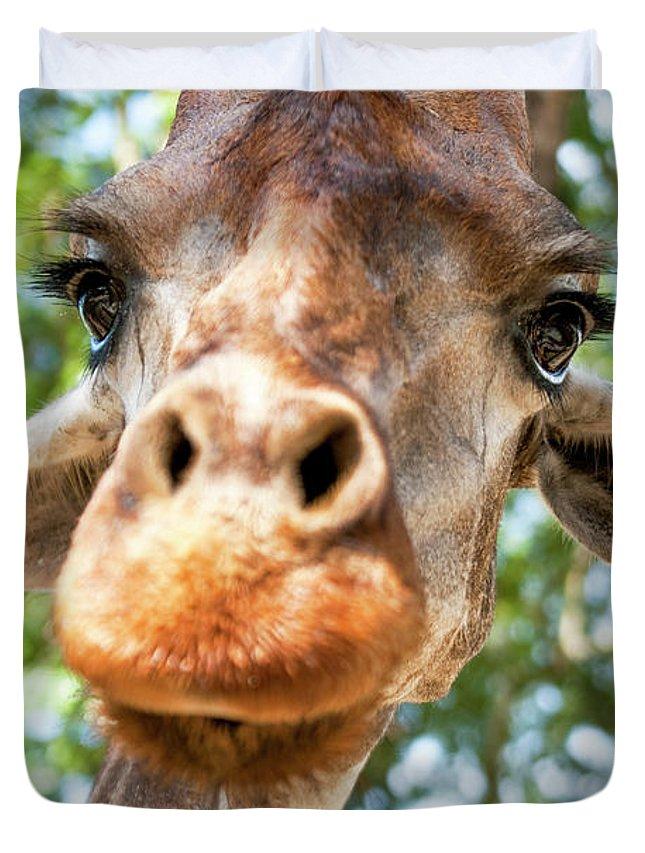 Giraffe Duvet Cover featuring the photograph Giraffe Interest by Jodie Nash