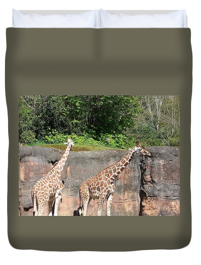 Giaraffe Duvet Cover featuring the photograph Giraffe by Jesse Salas