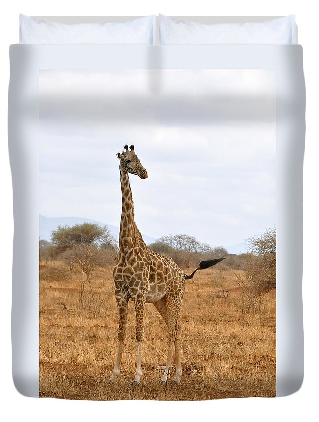 Wildlife Duvet Cover featuring the photograph Giraffe by Rachel Young
