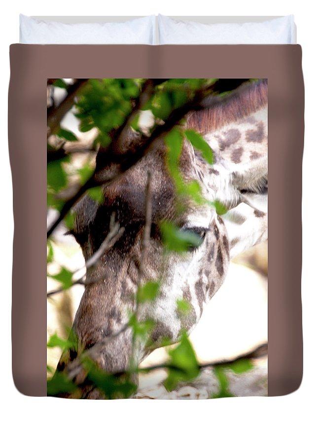 Giraffe Duvet Cover featuring the photograph Giraffe by Steven Natanson