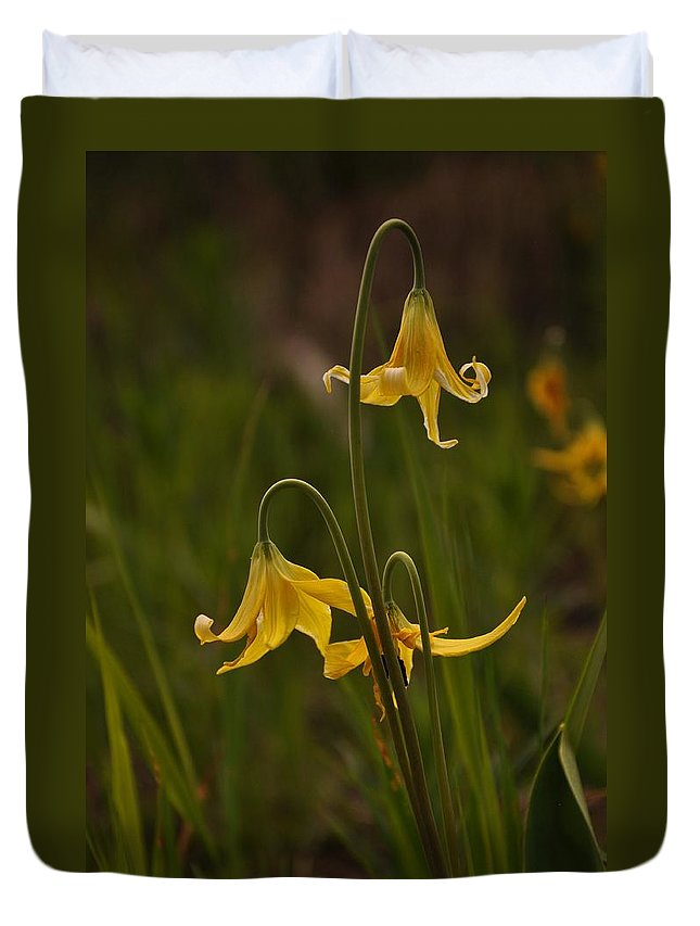 Yellowstone National Park Duvet Cover featuring the photograph Glacier Lilly by Frank Madia