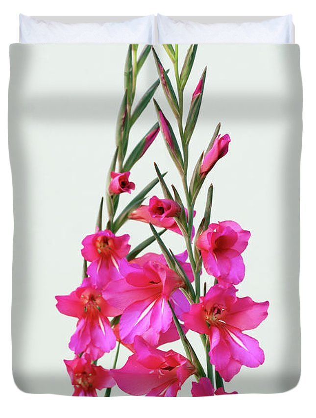 Flower Duvet Cover featuring the photograph Gladioli Byzantinus In Love by Terri Waters