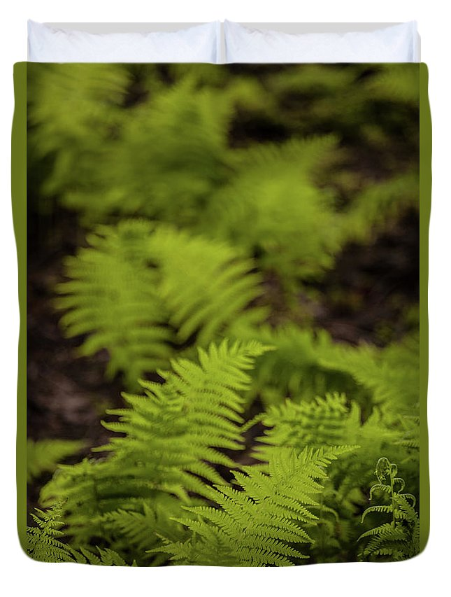 Ferns Duvet Cover featuring the photograph Glimmering Ferns by Irwin Barrett