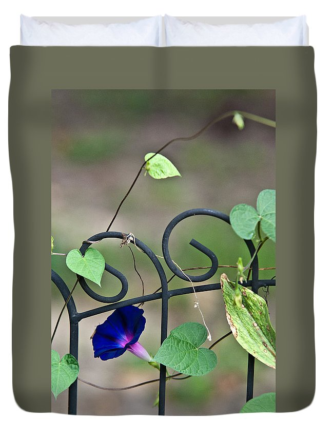 Morning Duvet Cover featuring the photograph Glorious Morning Glory by Douglas Barnett