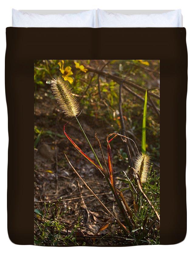 Kentucky Duvet Cover featuring the photograph Glowing Foxtails by Douglas Barnett