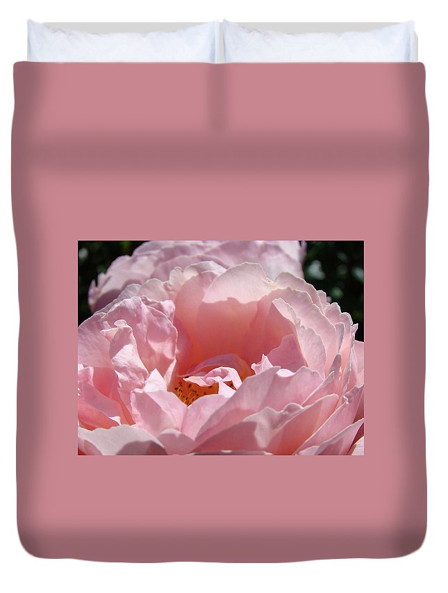 Rose Duvet Cover featuring the photograph Glowing Pink Rose Flower Giclee Prints Baslee Troutman by Baslee Troutman
