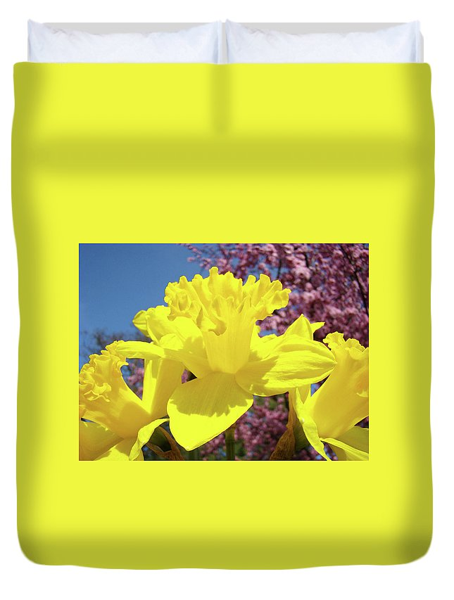 Daffodils Duvet Cover featuring the photograph Glowing Yellow Daffodils Art Prints Pink Blossoms Spring Baslee Troutman by Baslee Troutman