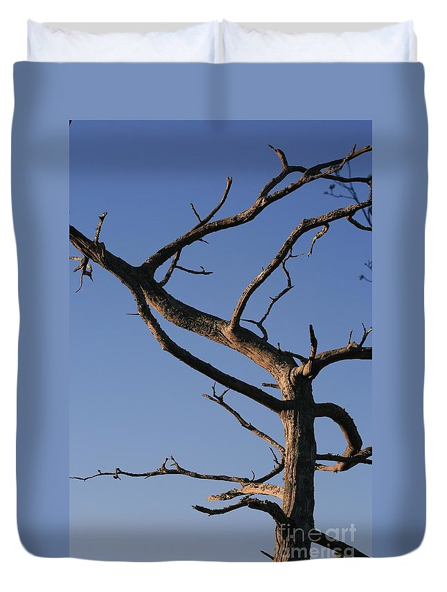 Tree Duvet Cover featuring the photograph Gnarly Tree by Nadine Rippelmeyer