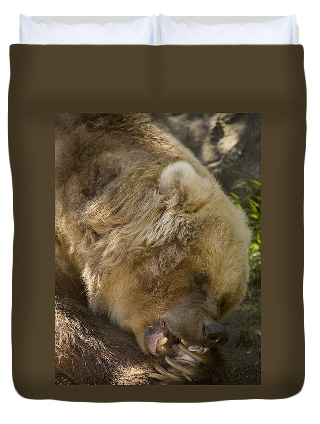 Bear Duvet Cover featuring the photograph Gnaw by Mike Dawson