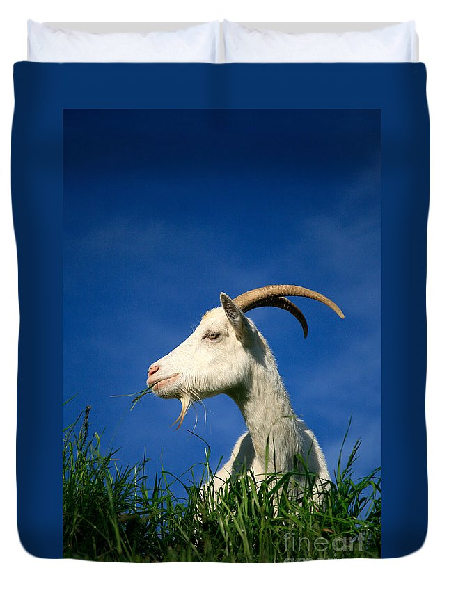Animals Duvet Cover featuring the photograph Goat by Gaspar Avila